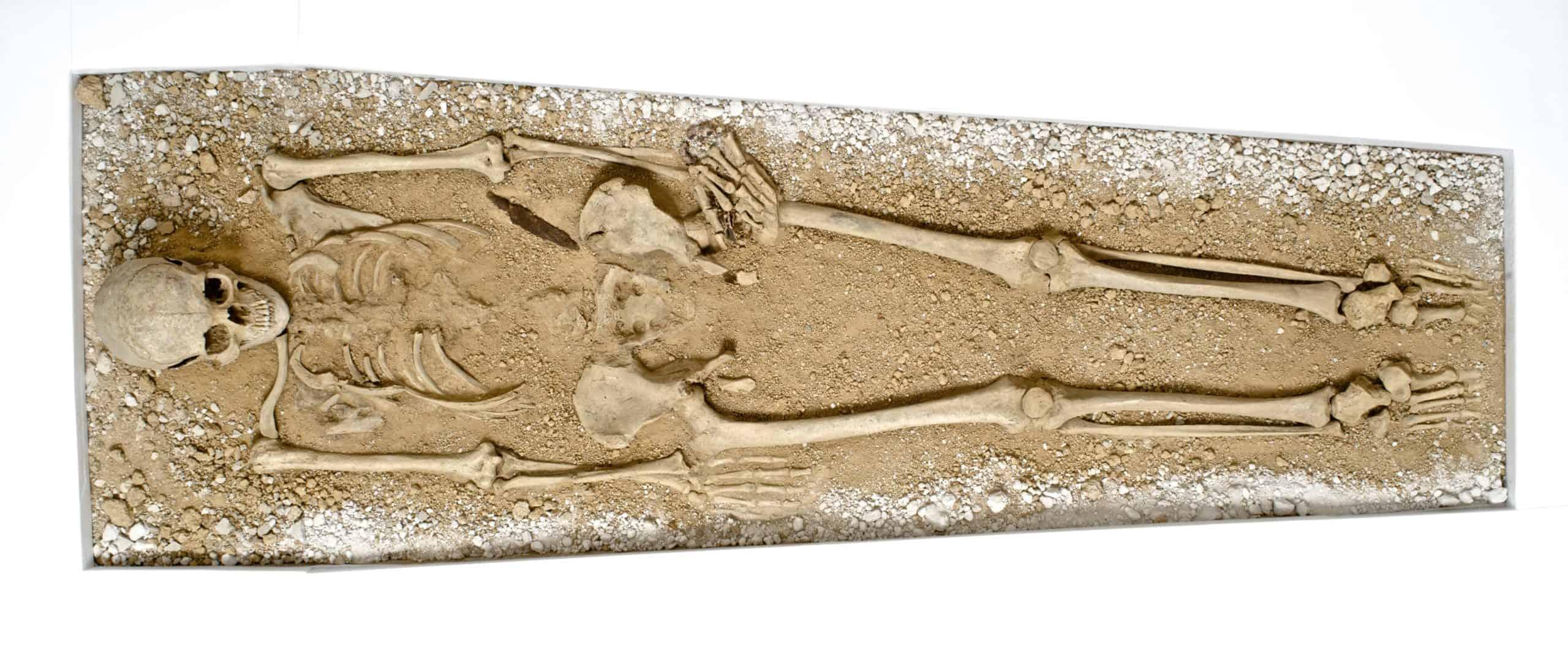 Anglo Saxon 2 Aefre skeleton