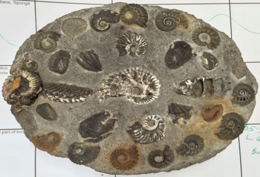Rocks and Fossils 3 F2702 FOSSIL PUDDING
