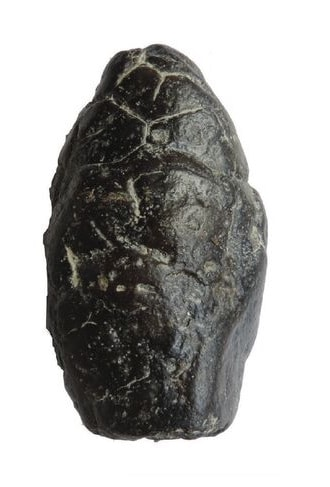 Rocks and Fossils 6 FM 2017 8 4 Coprolite