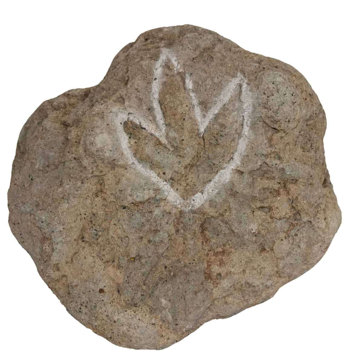 Rocks Resources IMG_20200507_095719 dinosaur footprint on display at Folkestone Museum