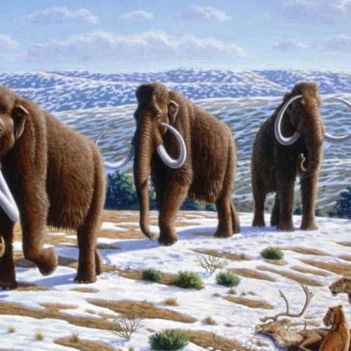 Rocks Resources Woolly_mammoth_(Mammuthus_primigenius)_-_Mauricio_Antón