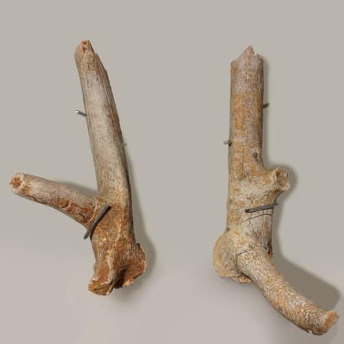 Rocks and Fossils 11 IMG_20200507_101653 F2691 red deer antler