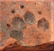 Romans 5b Dog paw prints on a Roman roof tile close up