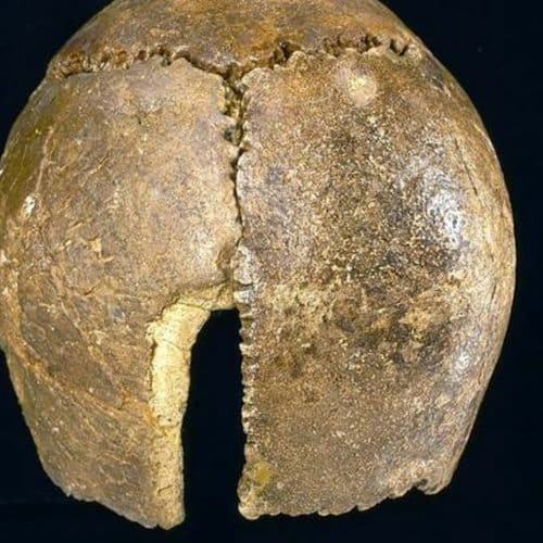 Stone Age to Iron Age 13 Swanscombe Man skull
