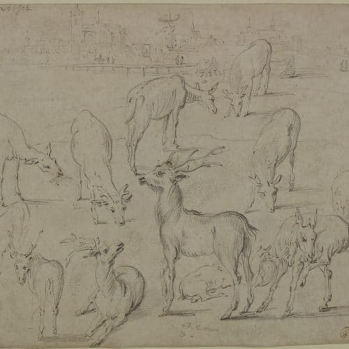 Master 2 Studies of Deer F3644_7 P41