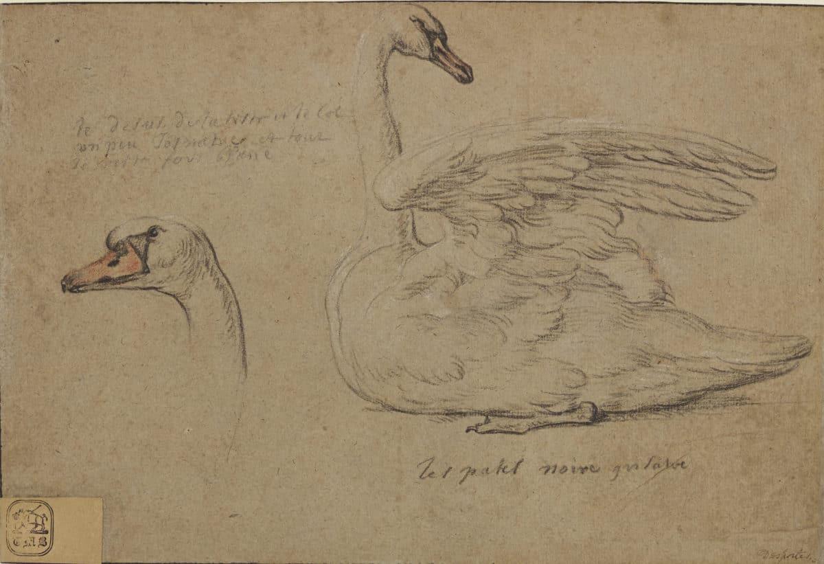 Master 2 Studies of a Swan F3644_26 P35