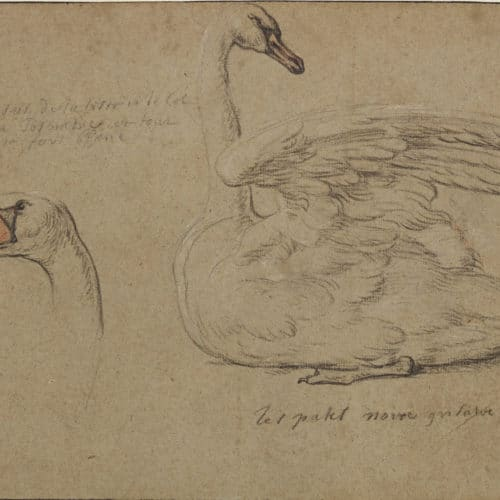 Master 2 Studies of a Swan F3644_26 P35